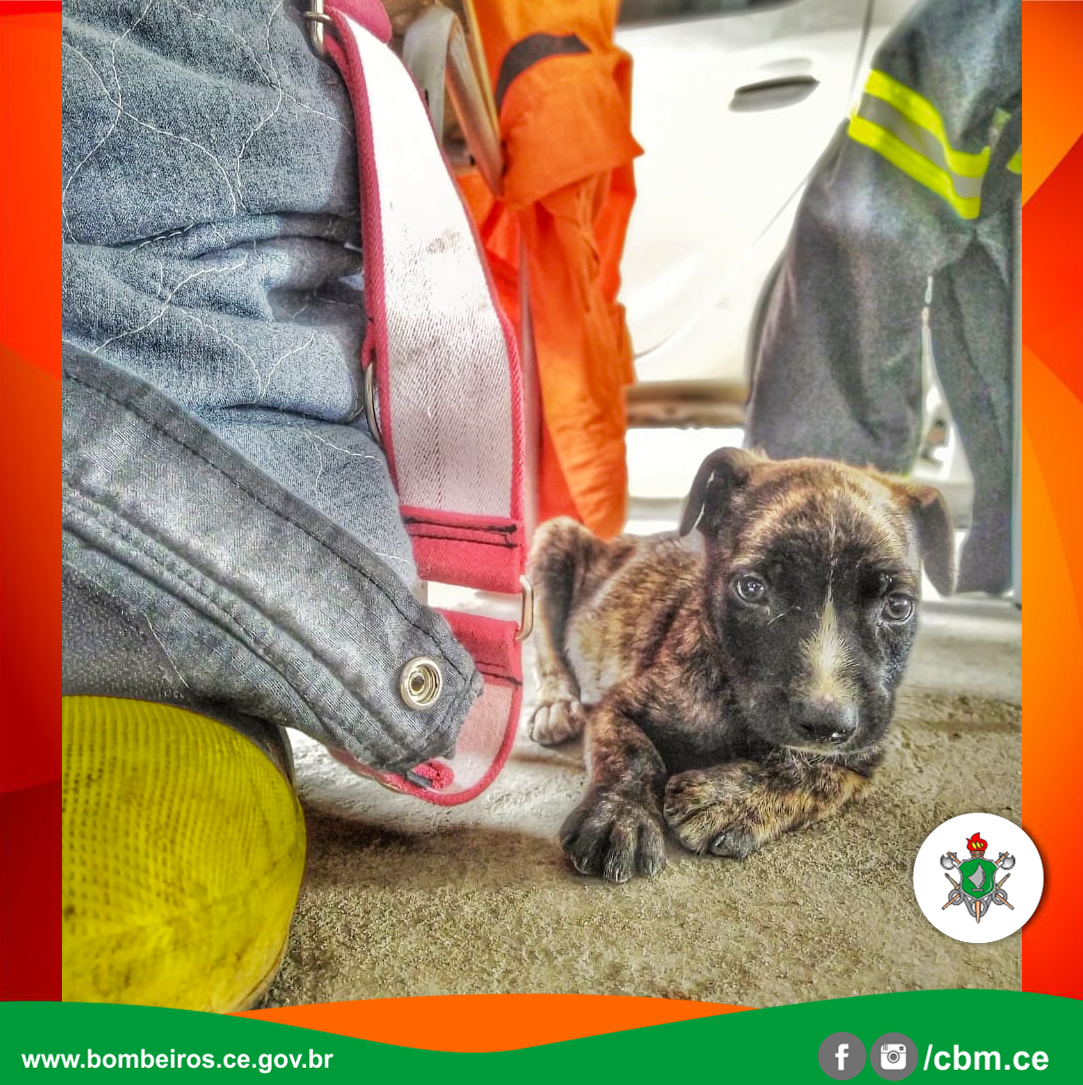 Bombeiros resgatam filhote de cachorro que caiu em bueiro, em Juazeiro do Norte