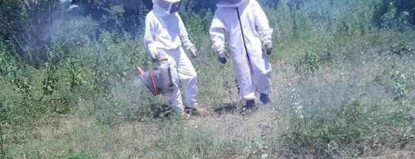 Bombeiros do Ceará orientam como proceder em caso de ataque de abelhas