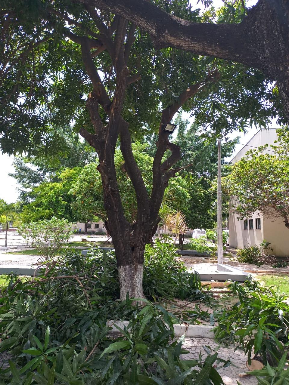 8ªCia/1ºBBM realiza poda de árvores no 5º Juizado Especial e na sede do TJCE