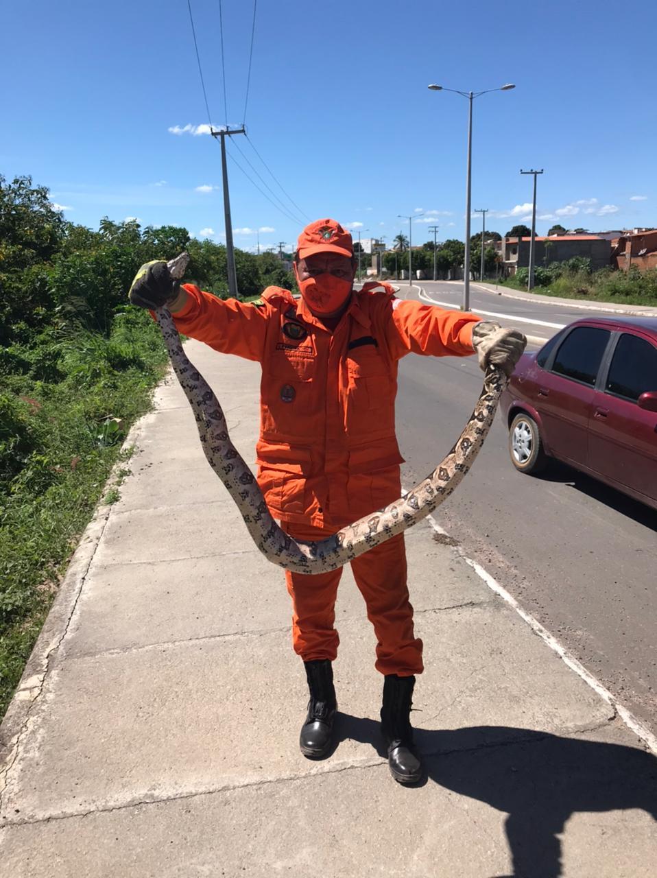 Cobra jiboia de 2 metros é resgatada pelos bombeiros de Juazeiro do Norte/CE
