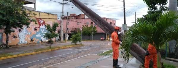 Bombeiros atuam em corte de árvore tombada sobre fiação, em Sobral/CE