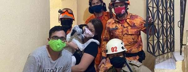 Corpo de Bombeiros resgate animal preso em portão