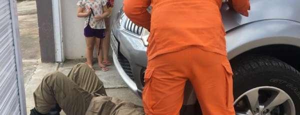 CBMCE resgata gato de motor de camionete, em Quixadá/CE