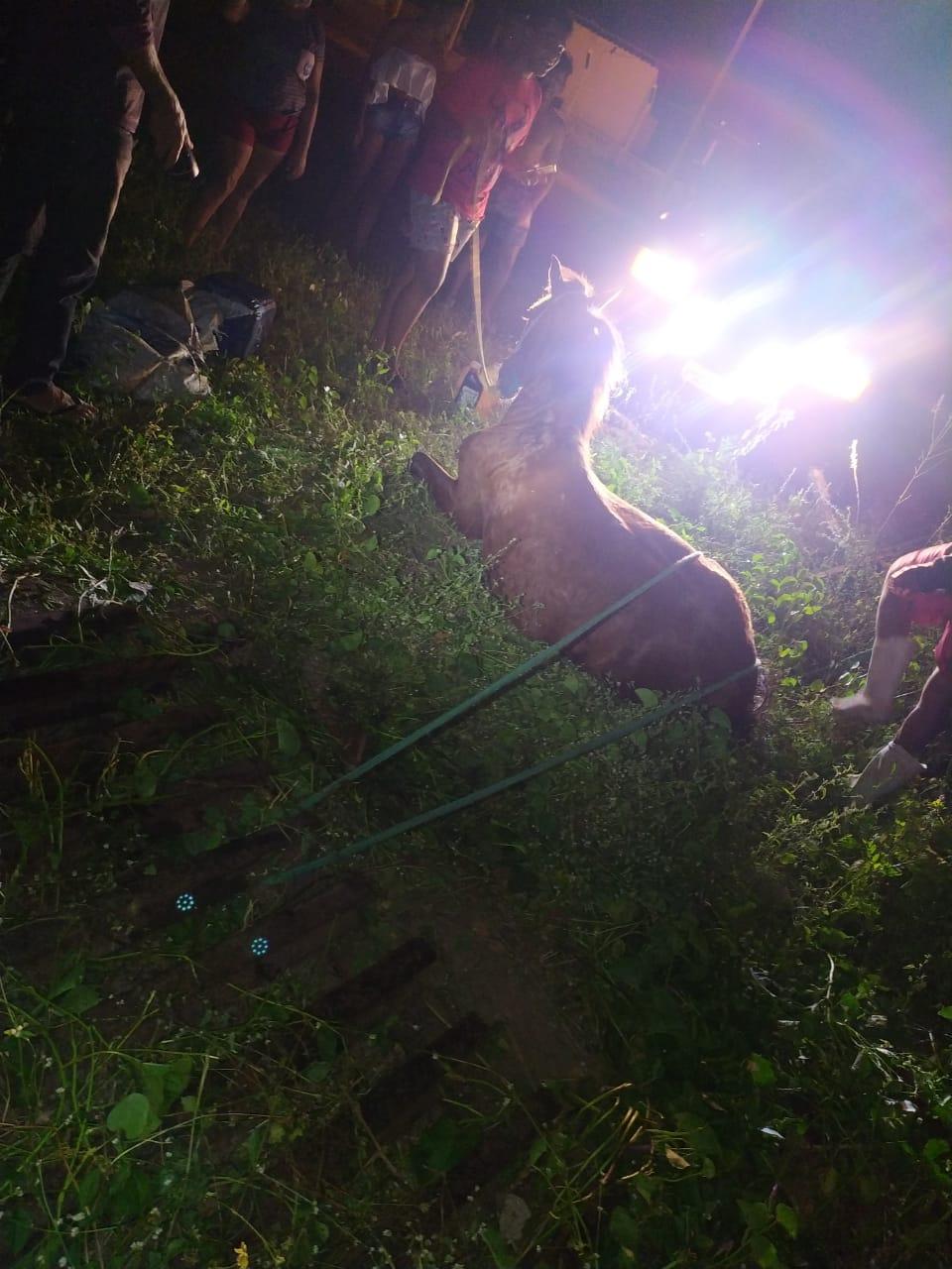 Bombeiros resgatam cavalo preso em mata-burro, na zona rural de Crateús