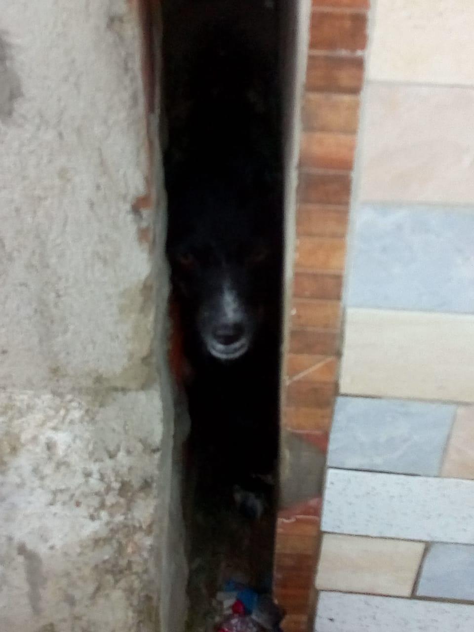 Bombeiros resgatam cadela presa entre paredes de casa, em Maracanaú