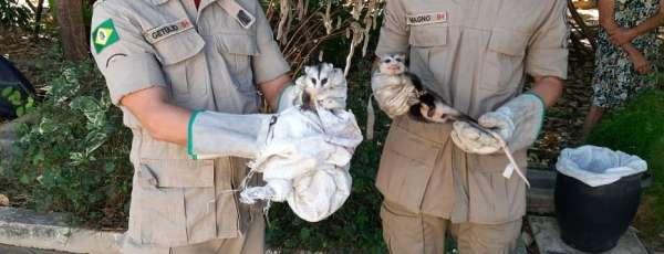 Corpo de Bombeiros resgata animal (cassaco), em Crateús
