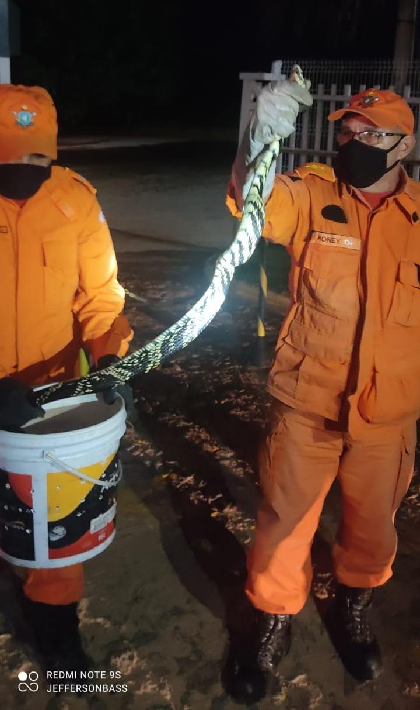 Corpo de Bombeiros resgata cobra caninana de coqueiro no Trairi