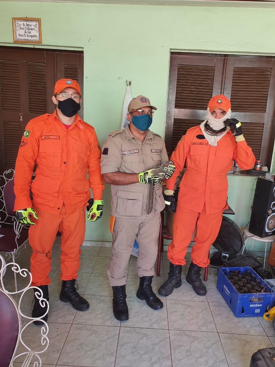 Bombeiros resgatam sagui e o conduzem ao seu habitat natural, em Canindé