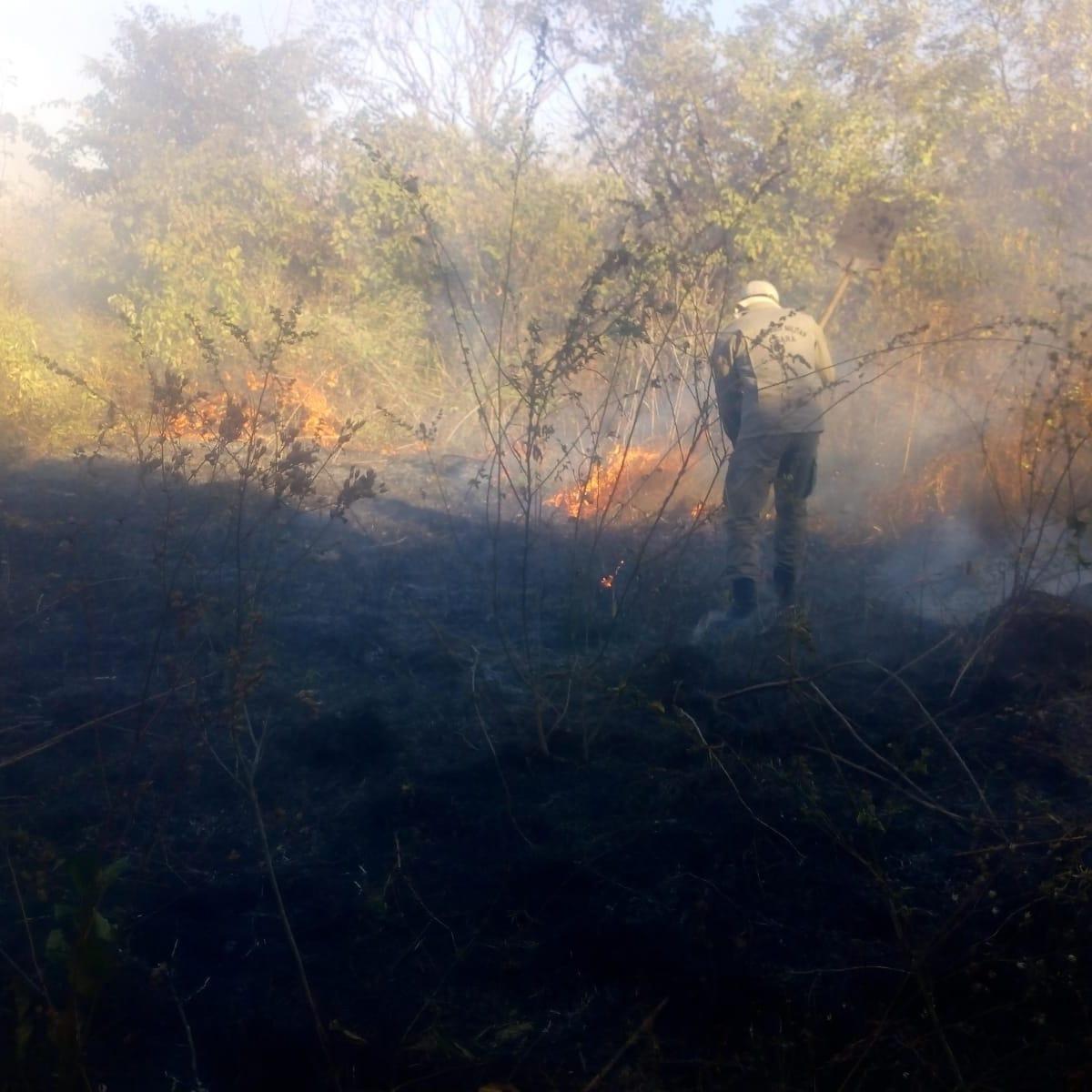 Corpo de Bombeiros evita que casas fossem queimadas por incêndio em vegetação