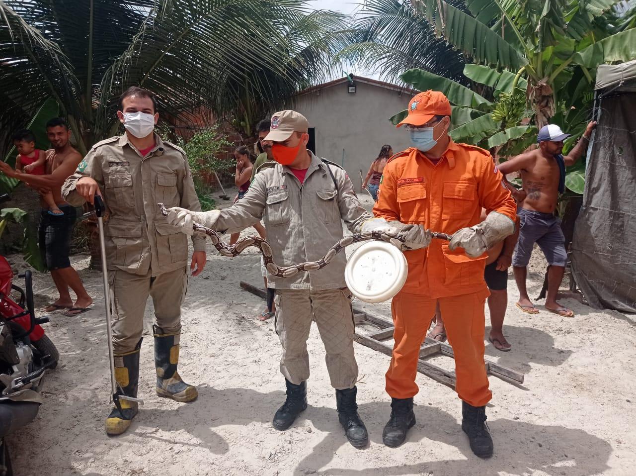 Corpo de Bombeiros resgata cobra jiboia de barraca no quintal em Itaitinga