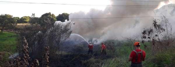 Corpo de Bombeiros debela incêndio e resgata iguana no Jardim Cearense