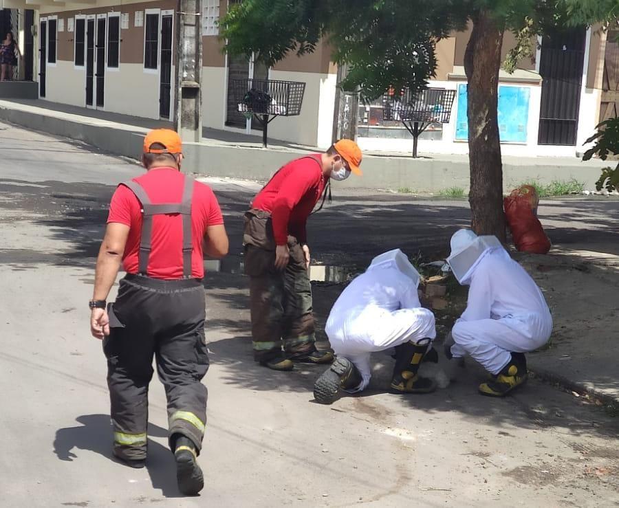 Corpo de Bombeiros resgata senhor e dois cachorros de ataque de abelhas