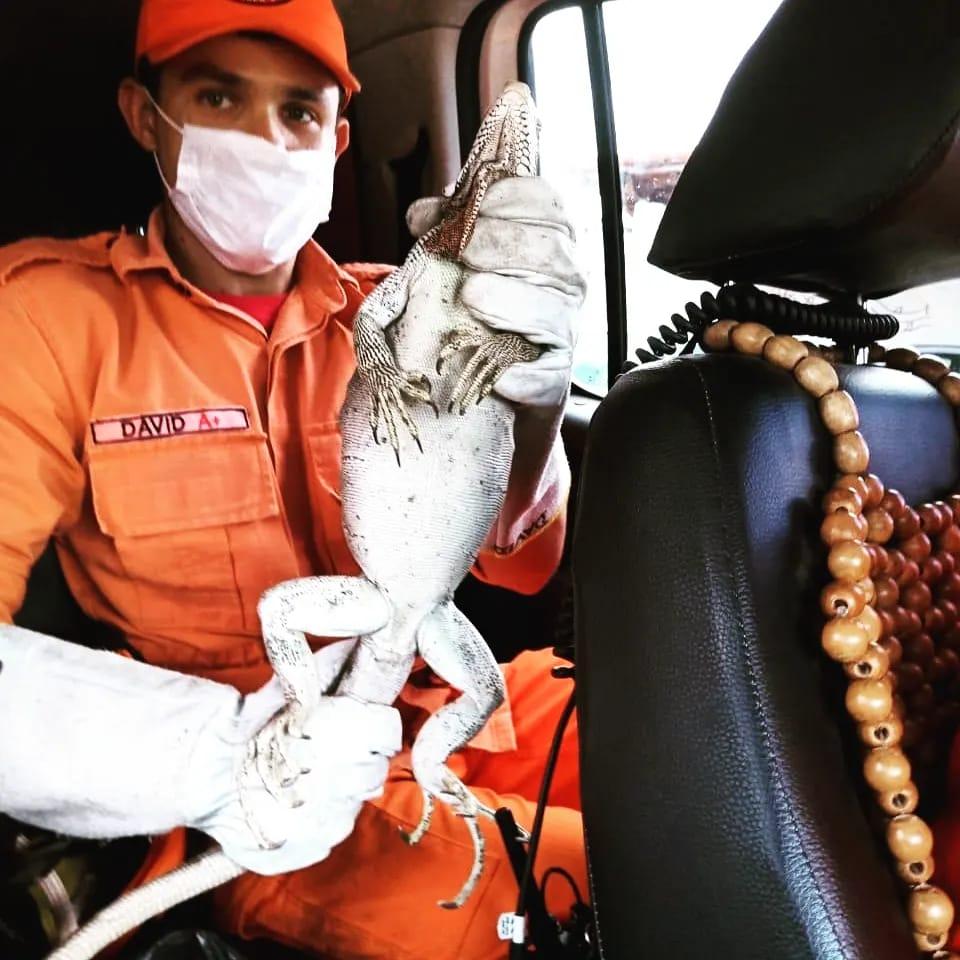 Corpo de Bombeiros resgata Iguanas e Cobras em Caucaia, Maracanaú e Canindé